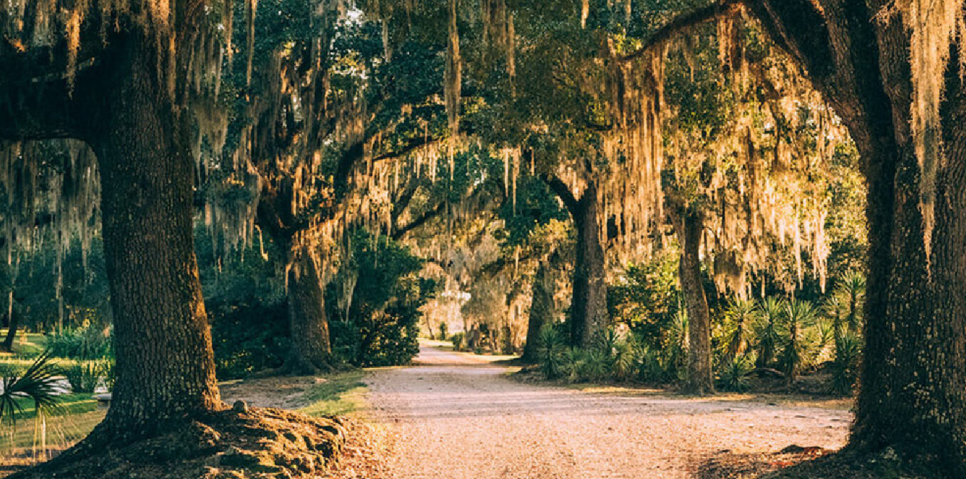 Explore our Home on Avery Island