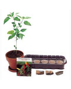 Red Pepper Plant Kit